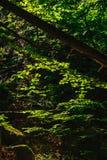 Folhas e rochas iluminadas pela luz do sol Foto de Stock