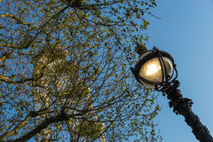 Folhas e roda da lâmpada Foto de Stock Royalty Free