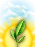 Folhas e sol ilustração stock