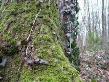 Folhas e tronco de árvore no inverno Imagem de Stock Royalty Free