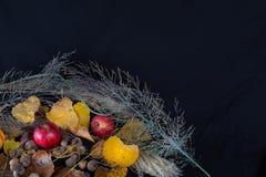 Folhas e urze das maçãs Foto de Stock