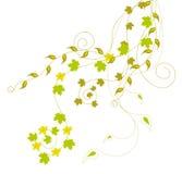 Folhas e videiras do verde ilustração royalty free