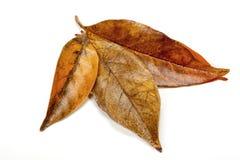 Folhas em Autumn Colors Forming Palmate Pattern foto de stock