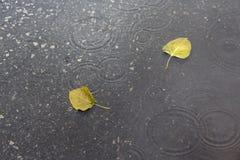 Folhas em chover Foto de Stock Royalty Free
