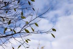 Folhas em ramos Fotos de Stock