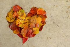Folhas em um coração no concreto, fundo Imagem de Stock