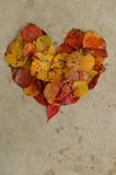 Folhas em um coração no concreto, fundo Imagens de Stock
