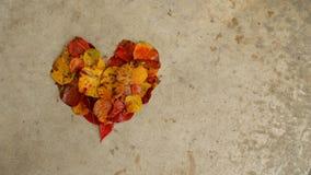 Folhas em um coração no concreto, fundo Imagens de Stock Royalty Free