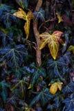 Folhas em um ramo Fotos de Stock