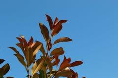 Folhas em um ramo Imagens de Stock