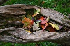 Folhas em uma árvore imagens de stock royalty free