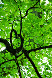 Folhas em uma árvore