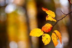 Folhas em uma árvore Foto de Stock