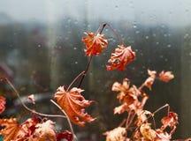 Folhas em uma janela Fotos de Stock