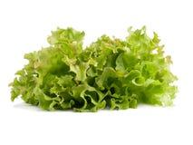 Folhas encaracolado frescas verdes da salada da alface isoladas no fundo branco Foto de Stock Royalty Free
