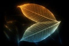 Folhas esqueletais efervescentes no preto Fotos de Stock