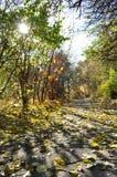 Folhas, estrada foto de stock