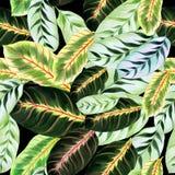 Folhas exóticas - Morant Imagem de fundo da aquarela - composição decorativa Use materiais impressos, sinais, artigos, Web site,  Fotos de Stock Royalty Free
