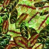 Folhas exóticas - Morant Teste padrão sem emenda Imagem de fundo da aquarela - composição decorativa Foto de Stock Royalty Free