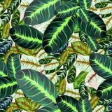 Folhas exóticas - Morant Teste padrão sem emenda Imagem de fundo da aquarela - composição decorativa Imagens de Stock Royalty Free