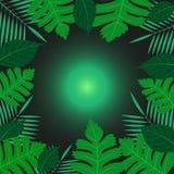 Folhas exóticas tropicais verdes em torno do fundo de incandescência verde do preto do ballon ilustração do vetor
