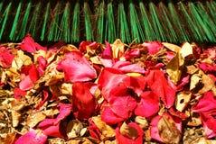 Folhas exteriores das pétalas dos Sweepings que ajuntam acima Fotografia de Stock Royalty Free