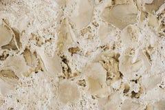 Folhas fossilizadas Imagem de Stock Royalty Free