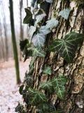 Folhas fotogênicos imagens de stock