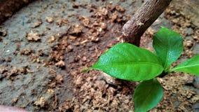 Folhas frescas Imagem de Stock Royalty Free