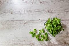 Folhas frescas da alface na placa imagem de stock royalty free