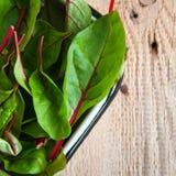 Folhas frescas da beterraba de forragem Fotos de Stock Royalty Free