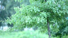 Folhas frescas da mola Imagem de Stock
