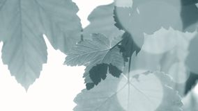 Folhas frescas da mola com o close up backlit sol vídeos de arquivo