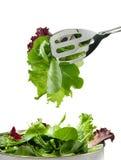 Folhas frescas da salada Foto de Stock Royalty Free