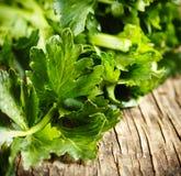 Folhas frescas do aipo Imagem de Stock Royalty Free