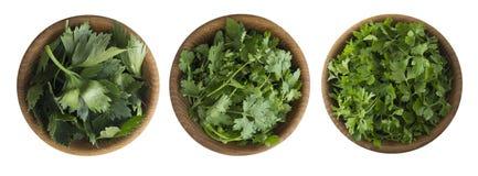 Folhas frescas do coentro, do aipo e do coentro na bacia de madeira Imagens de Stock