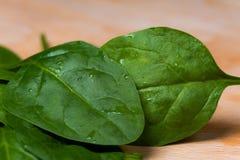 Folhas frescas do espinafre Foto de Stock