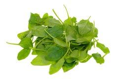 Folhas frescas do espinafre Imagem de Stock Royalty Free