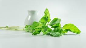 Folhas frescas do minchi/hortelã no fundo branco Fotos de Stock Royalty Free