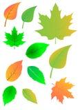 Folhas frescas do verde ilustração do vetor