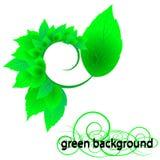 Folhas frescas do verde ilustração royalty free