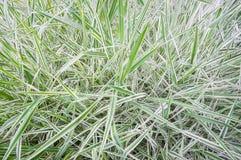 Folhas frescas do verde Foto de Stock Royalty Free
