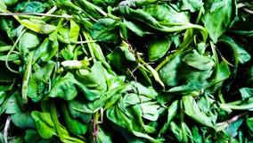 Folhas frescas dos espinafres fotos de stock royalty free