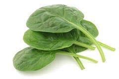 Folhas frescas dos espinafres Imagem de Stock