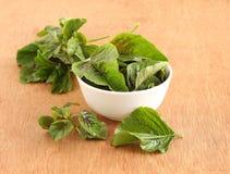 Folhas frescas e orgânicas do amaranto Imagem de Stock Royalty Free