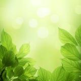 Folhas frescas e verdes Fotos de Stock Royalty Free