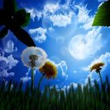Folhas frescas, fundo Imagens de Stock Royalty Free