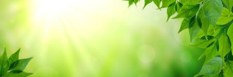 Folhas frescas na primavera imagens de stock
