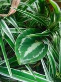 Folhas frescas no jardim foto de stock