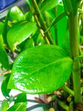 Folhas frescas no jardim imagem de stock